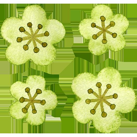 緑色の梅の花の水彩イラスト