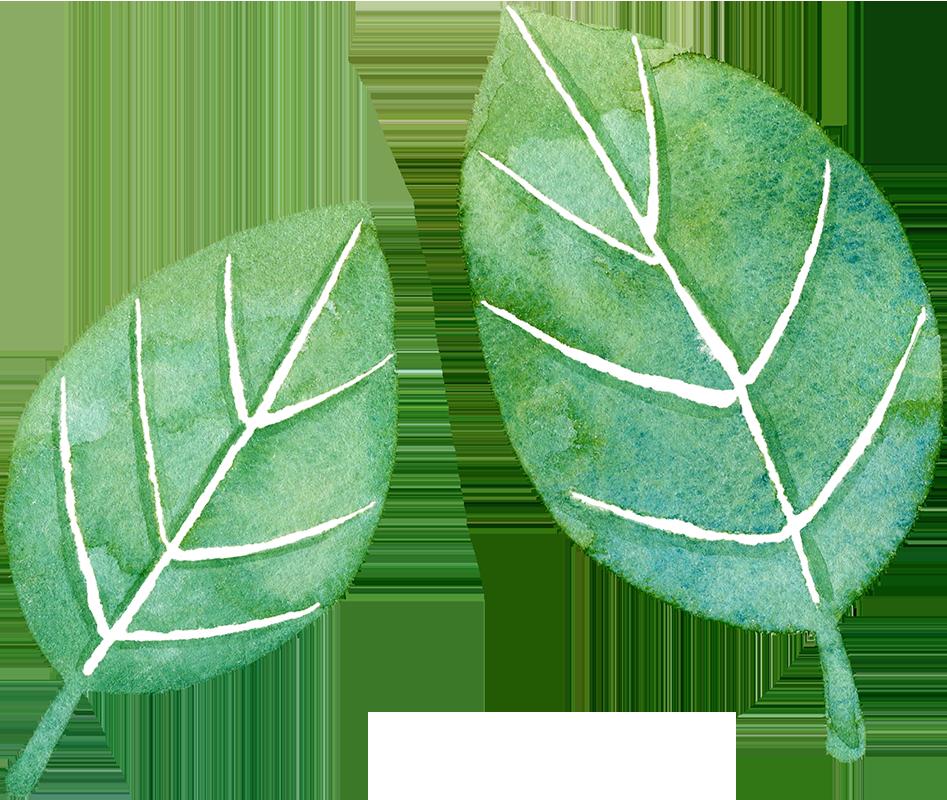 葉っぱの水彩イラスト