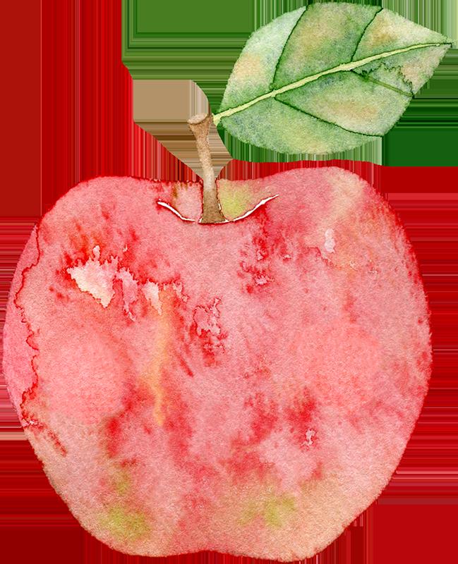 リンゴの水彩イラスト
